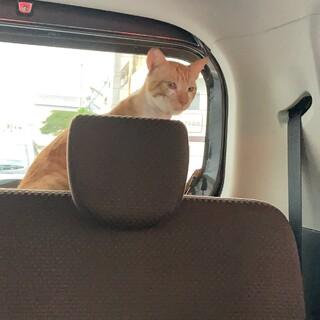 駐車場で弱っていた野良猫ちゃん(去勢済)