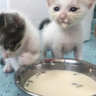 神の島 子猫4匹