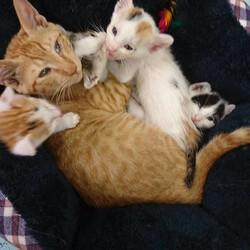 リリーナ君が4匹を子守りしてくれちょります。