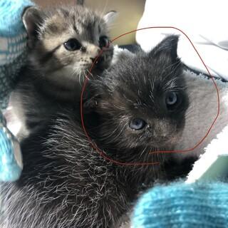 保護した子猫です。黒