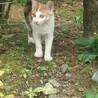 いわき市 三毛の子猫の里親募集です。