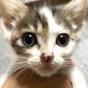 icat-M960 可愛い子猫さん♪