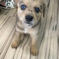 自宅で産まれたミックス犬です