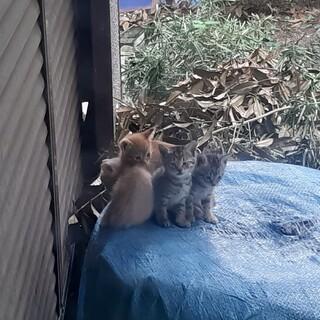 生後約1ヶ月の野良仔猫ちゃん4匹です。