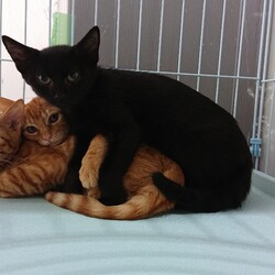 魔法使いの猫たちの譲渡会&ボランティア説明会 サムネイル2