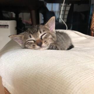 2ヶ月 子猫 クリくん