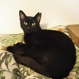 美人な黒猫お姫様は猫が大好き★
