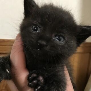 生後1ヵ月程度の子猫(=^x^=)