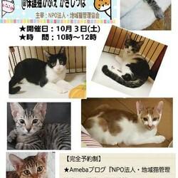 子猫のお見合い会@茨木市保護猫カフェ サムネイル1