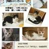 子猫のお見合い会@茨木市保護猫カフェ