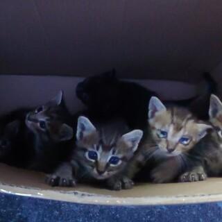 元気いっぱい!6匹の子猫たち(生後4週)