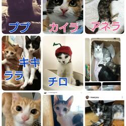 保護犬保護猫譲渡会&チャリティーバザー★坂戸 サムネイル3