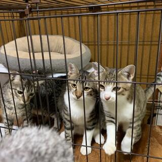 人懐っこい子猫3兄妹