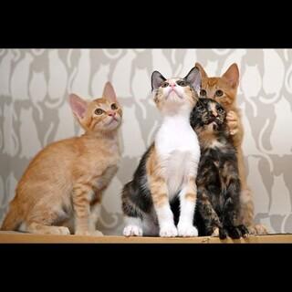生後3か月!6匹の子猫たちです