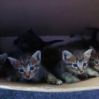 元気いっぱい!6匹の子猫たち(1ヶ月)