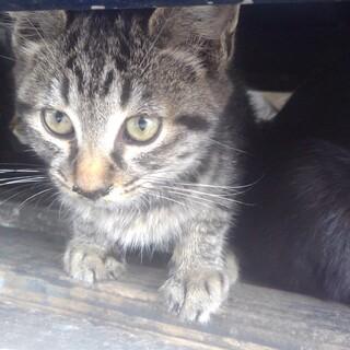 野良猫です  キジトラ