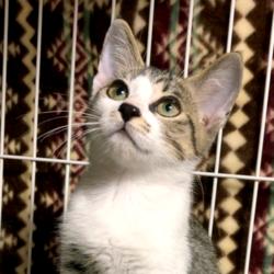 ▼猫の譲渡会▼名古屋市港区