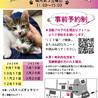 第98回保護猫たちの幸せ探し会