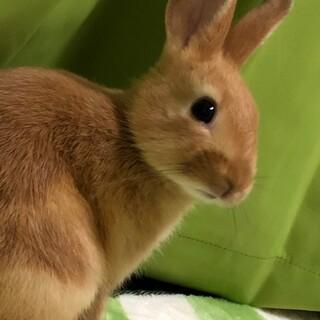 元気で活発なウサギさん