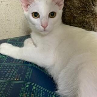 6ヶ月 白&黒猫兄弟(はく&こく)