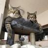 最近の猫たち