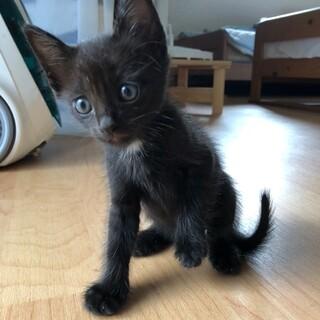 生まれて1ヶ月の子猫 里親募集!