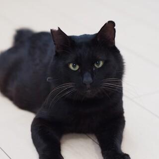 フレンドリー黒猫ヤマト君