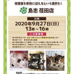 【おーあみ避難所】子猫の譲渡会/島忠荏田店
