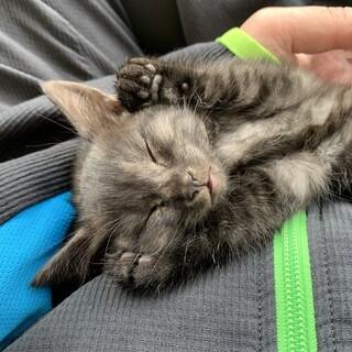 保護猫ちゃん、人懐っこいです。