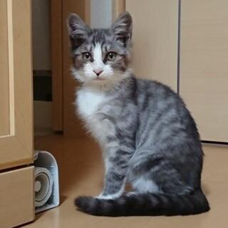 保護した猫になります。里親募集中!