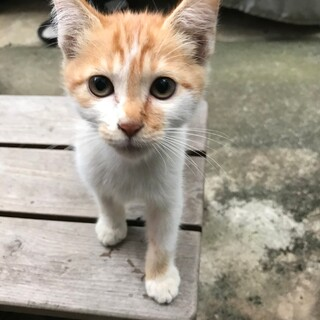 野良だけどとっても可愛い人なつこい仔猫です!