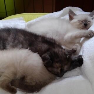 切なくなる程可愛い子猫たち