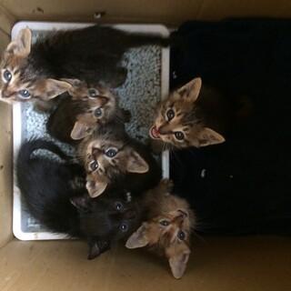 元気いっぱい!6匹の子猫たち(残り2匹)