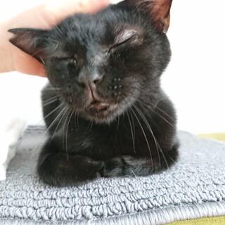 黒猫 くまぷー