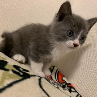 かわいい子猫の里親募集中です!