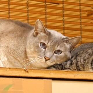灰色猫 マルちゃん