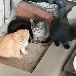 授乳中とは知らず捕獲、子猫の運命は?