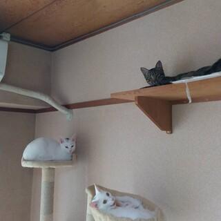 兄弟猫達に幸せを!!