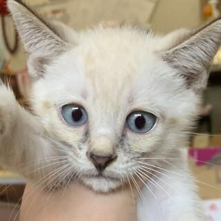 子猫の家族探してます。