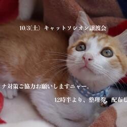*子猫が中心譲渡会*大人猫も少し参加します
