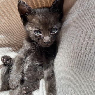 黒色の子猫ちゃんです!