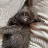 黒色の子猫ちゃんです。