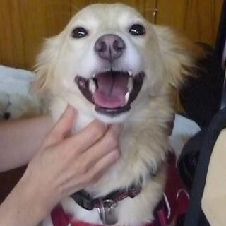 中型犬mix♀2,3歳位・トイレ躾済・室内飼育