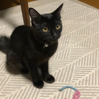 尻尾ふさふさっの可愛い黒猫女子
