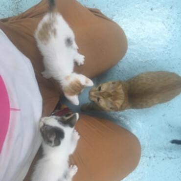 神の島 子猫4匹の写真