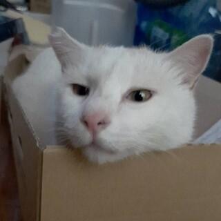 【去勢済】人懐っこい男の子猫です