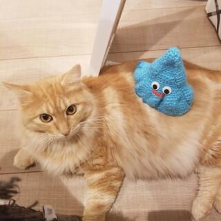 甘えん坊のもふもふ美猫。先住さんともすぐに仲良し♡
