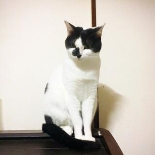白黒歌舞伎美猫鳴きちゃん