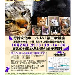 10/24(土曜)イコール保護猫譲渡会(予約制) サムネイル2