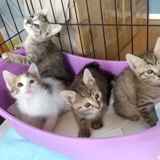 千葉県白井市/ミルクから育てた姉妹猫
